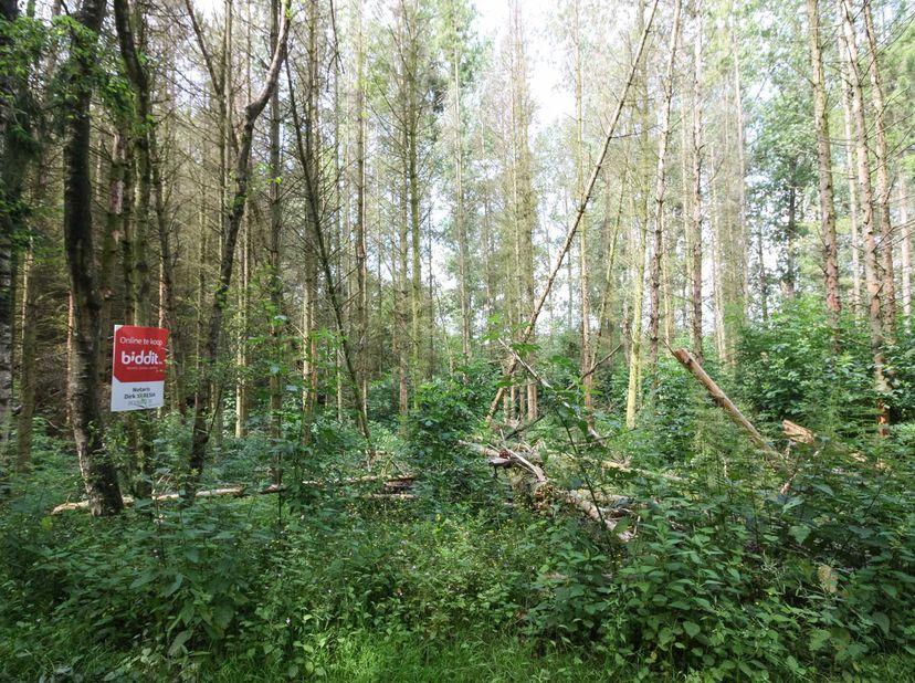 OPENBARE VERKOOP percelen weiland en bosgrond te Peer (Grote Brogel)  <br /> Notaris Dirk Seresia te Overpelt zal via een online openbare verkoop op