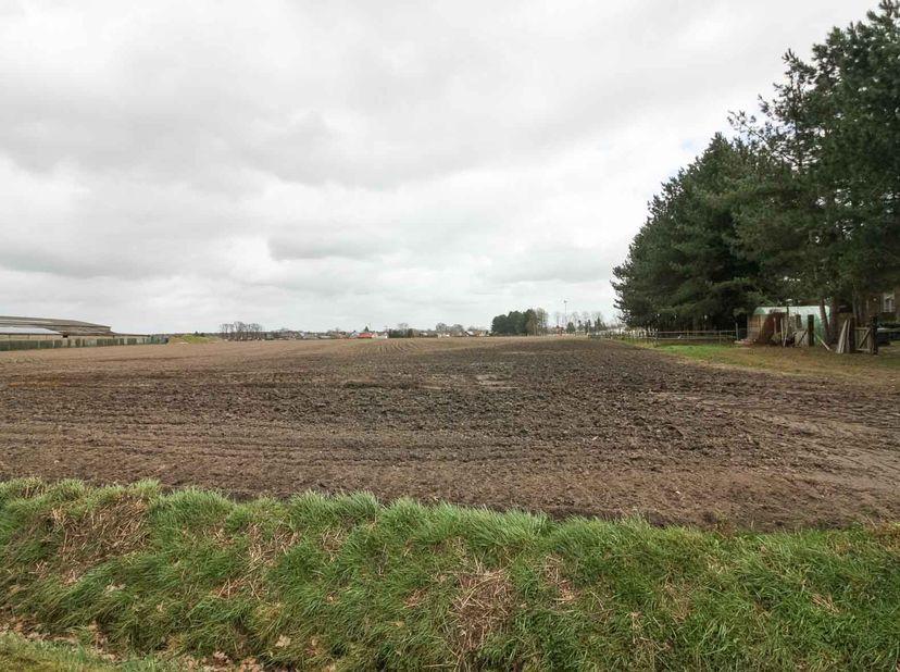 LOT 2: Perceel landbouwgrond, Groenewoudstraat Peer (Kleine Brogel), kad A nr 255 H en 248 C. 4ha31a81ca.  <br /> Gvg, Ag, Gvkr, Gvv. <br /> Vrij na
